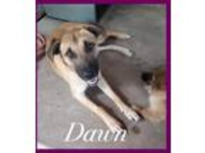 Adopt Dawn a Terrier (Unknown Type, Small) / Mixed dog in Comanche