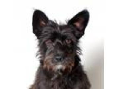 Adopt Nova a Black Terrier (Unknown Type, Medium) / Mixed dog in Los Angeles