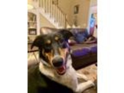 Adopt Nina--It's going to be alright! a Border Collie, Collie