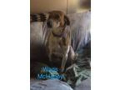Adopt Wags McHappy a Hound