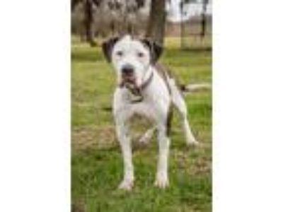 Adopt Sasha a Mixed Breed (Large) / Mixed dog in Lake Jackson, TX (25345869)