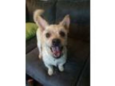 Adopt Maxx a Tan/Yellow/Fawn Terrier (Unknown Type, Medium) dog in Kennesaw