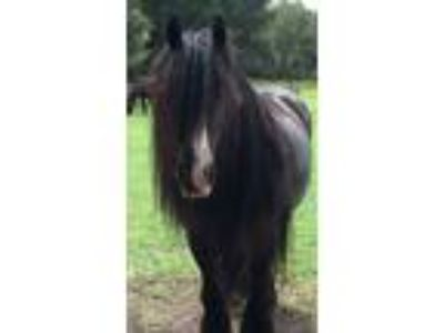 Craigslist horses for sale classified ads in citra - Craigslist hudson valley farm and garden ...