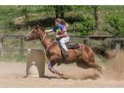 11 Year Old Barrel Horse With Speed and Agilty Hes a Beauty