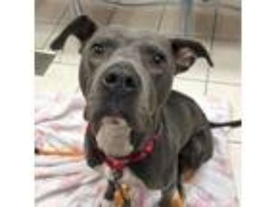 Adopt Bruce a Mixed Breed