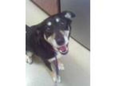 Adopt Bella a Black Mixed Breed (Medium) / Mixed dog in Carrollton