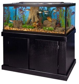LOOKING FOR: 75 and up gallon aquarium