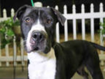 Adopt *BEN a Black - with White Mixed Breed (Medium) / Mixed dog in Ocala