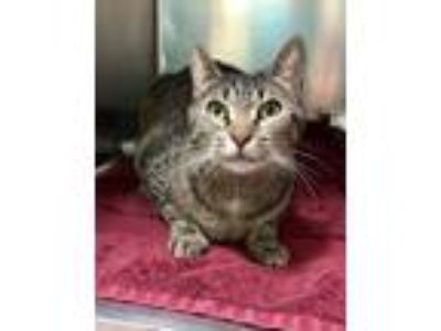Adopt Sherry (Available Thursday, 5/16/19) a Domestic Shorthair / Mixed cat in