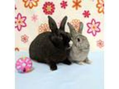 Adopt Jordan and Joanna a Bunny Rabbit