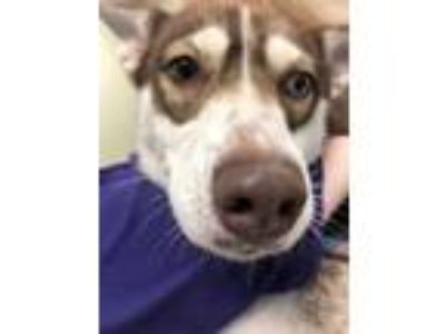 Adopt Frida a White Mixed Breed (Medium) / Mixed dog in Maumee, OH (25274883)
