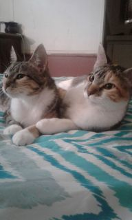 2 Kittens Need Home (5 months old)