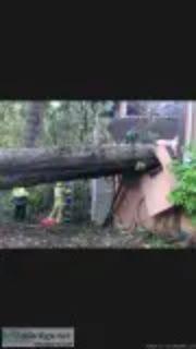 No cost Arborist consultation lic. Bon. Ins. yrs hazards healt