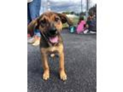 Adopt Doll a Black - with Brown, Red, Golden, Orange or Chestnut Shepherd
