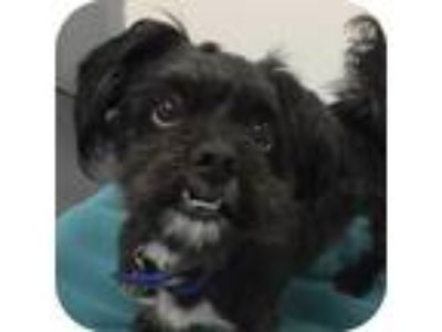 Adopt Black Jack 26254-d a Black Mixed Breed (Small) / Mixed dog in Ithaca