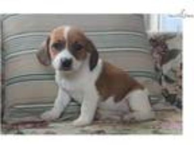Craigslist Animals And Pets For Adoption Classifieds In Palmyra