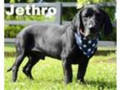Adopt Jethro a Black Basset Hound / Mixed dog in West Chester, PA (25363159)