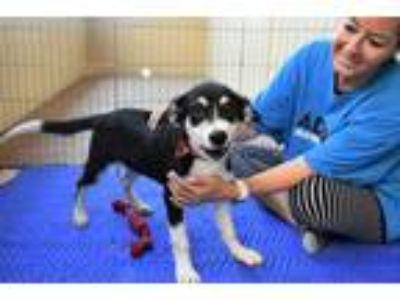 Adopt Terry a Black - with Tan, Yellow or Fawn Border Collie / Mixed dog in