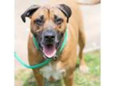 Adopt Bouncer a Mixed Breed