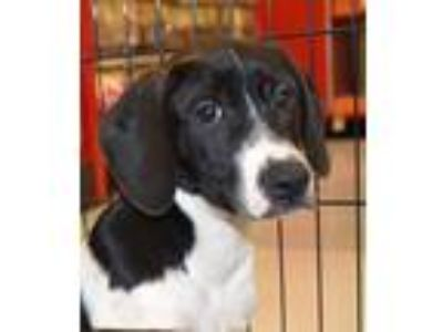 Adopt Higgins a Black - with White Mixed Breed (Medium) dog in Kennesaw