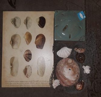 $5 Firm for Euc & new wall Sea shell decor with net & sea shells