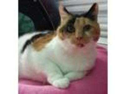 Adopt Fiona a Calico / Mixed cat in Lutherville, MD (22618721)