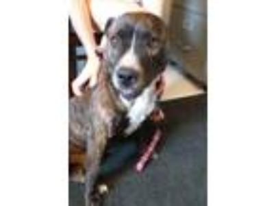 Adopt SHAGGY a Bull Terrier / Mixed dog in Metter, GA (25359242)