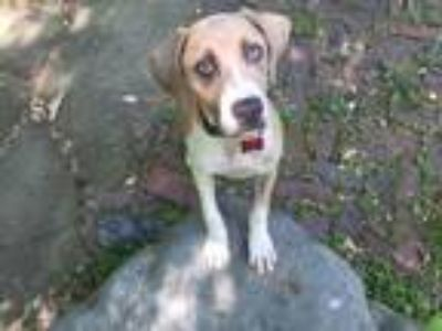 Adopt Whitney a Mountain Cur