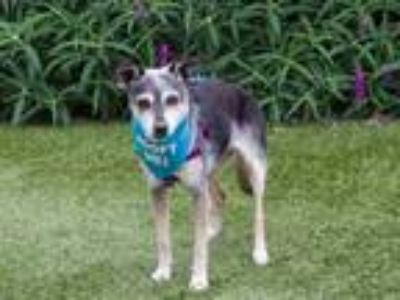 Adopt Paprika a Terrier (Unknown Type, Medium) / Mixed dog in Pacific Grove