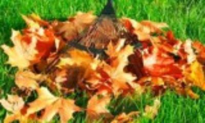 JAYS CUTS- LEAF REMOVAL- GUTTER CLEANING