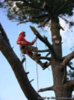 Tree RemovalTrimming Service- Conroe Tx- Licensed and Insured