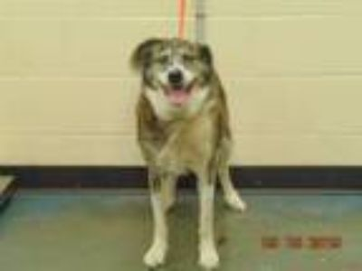 Adopt TRIXIE a Mixed Breed