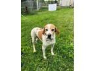 Adopt Rusty a Pointer