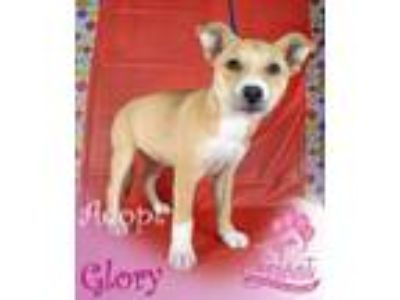 Adopt Glory a Husky, German Shepherd Dog