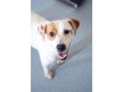 Adopt Bailey a Collie, Terrier