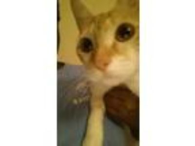 Adopt Maya a Orange or Red Tabby Domestic Shorthair / Mixed cat in Fort Valley