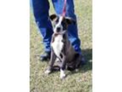 Adopt WILBUR a Black Hound (Unknown Type) / Mixed dog in Clinton, NC (25756010)