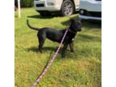 Adopt Ellie a Terrier (Unknown Type, Medium) / Miniature Pinscher / Mixed dog in
