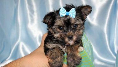 Puppies Dogs For Adoption Classifieds In Stockbridge Ga Clazorg