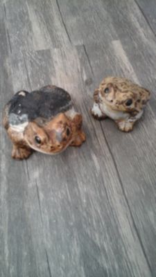 2 Friendly Toads.. FREE