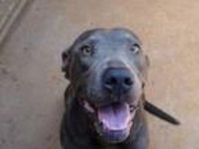 Adopt Butch a Mixed Breed