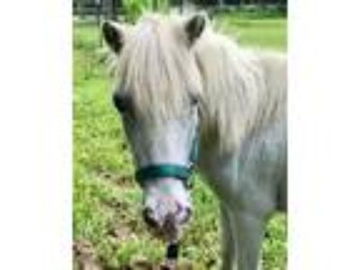Adopt Minnie a Miniature Horse