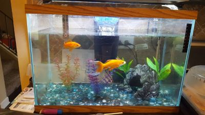 30 gal fish tank with filter and light