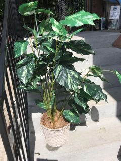 5 Faux Plant needs sprucing up