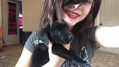 Rehoming 8 week old puppy