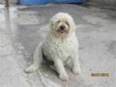 Adopt Berta a Terrier (Unknown Type, Medium) / Mixed dog in San Diego