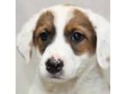 Adopt Emerald a White Feist / Terrier (Unknown Type, Small) / Mixed dog in