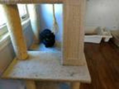 Adopt Stacy a Domestic Shorthair / Mixed (short coat) cat in Hoover