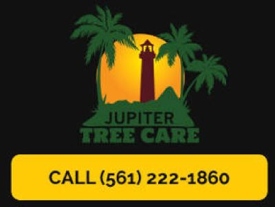 Fast Tree Trimming, Removal & Stump Grinding Services In Jupiter
