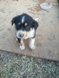 free puppy..great vday present (west monroe)